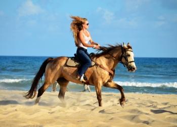 OBX Horseback Beach Rides